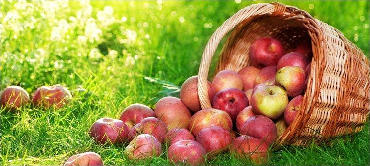 корзина-яблок