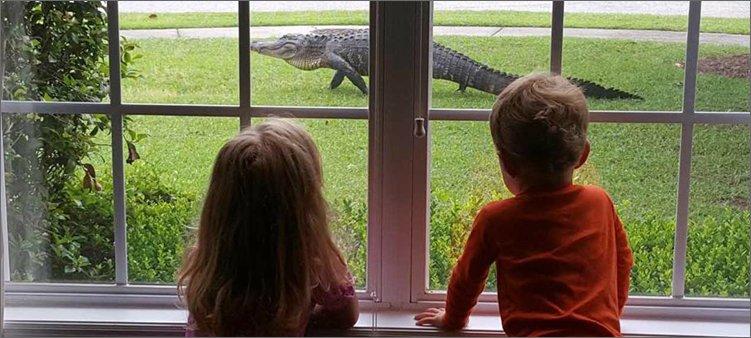 дети-смотрят-в-окно-на-крокодила