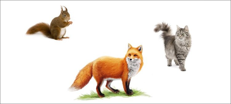 белка-лиса-кошка