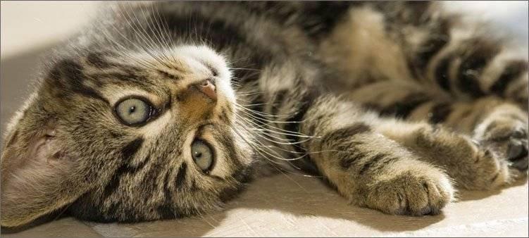 полосатый-котенок-лежит-на-полу