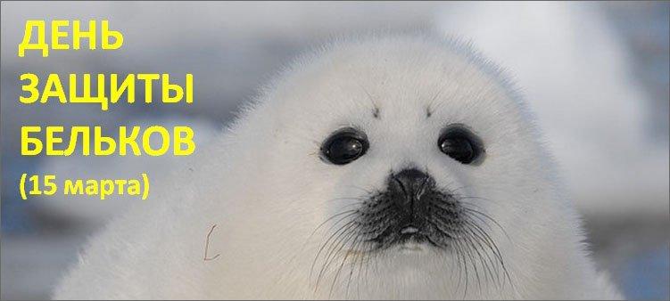 детеныш-тюленя-белек