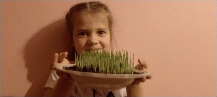 у-девочки-в-руках-тарелка-с-проросшей-пшеницей