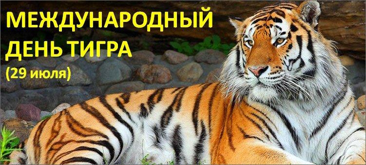 красивый-тигр-лежит