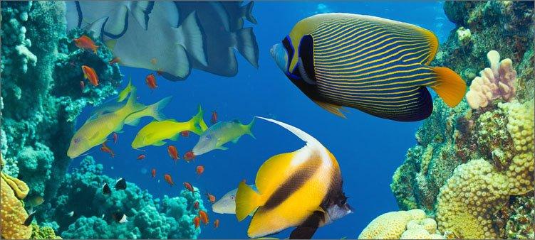 красивые-рыбки