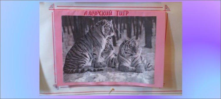 блок-амурский-тигр-на-плакате