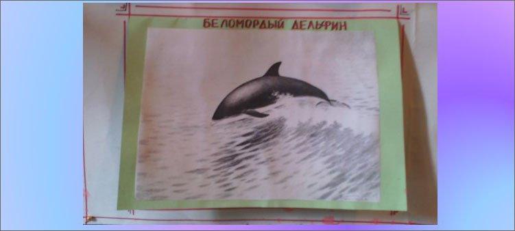 блок-дельфин-на-плакате