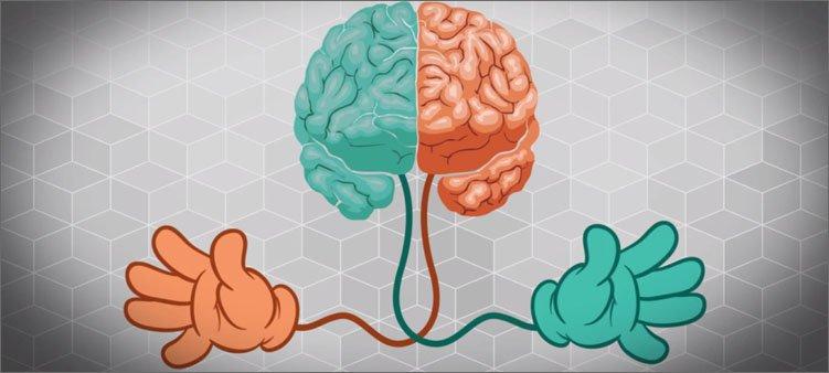 мозг-и-две-руки