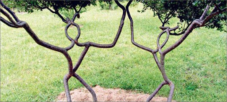 деревья-в-форме-людей