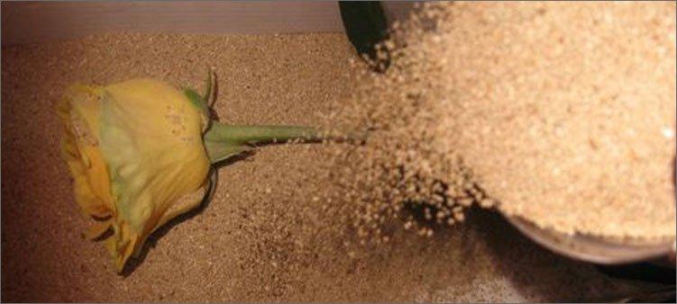 желтая-роза-засыпана-песком