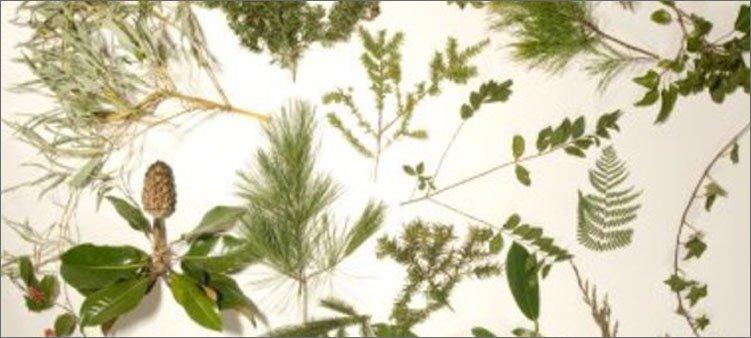 разные-засушенные-растения