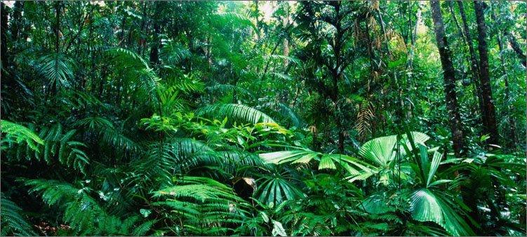 тропики-амазонки