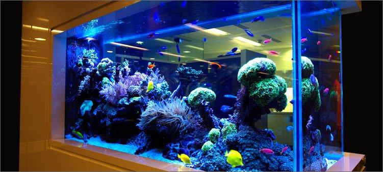 красивый-аквариум-с-рыбками