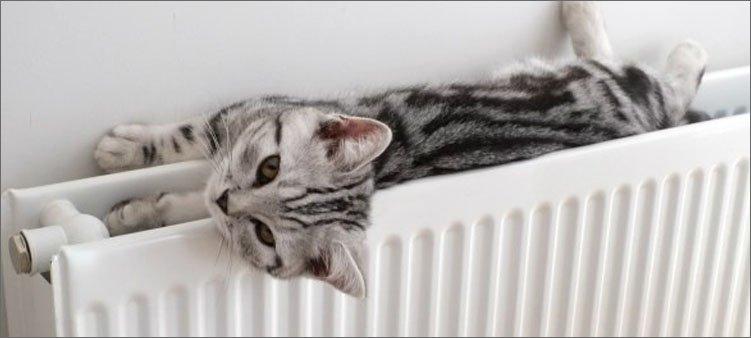кошка-лежит-на-теплой-батарее