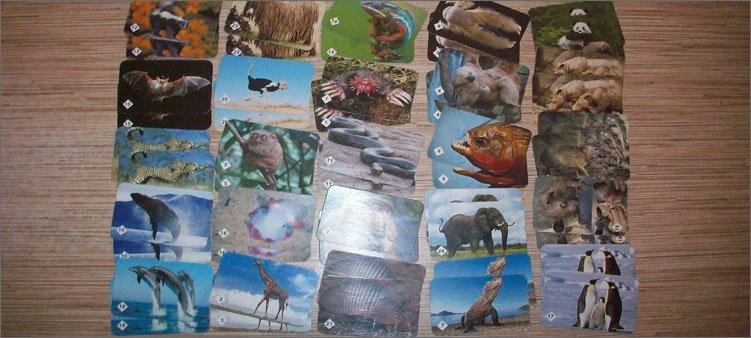 карточки-от-мемо-животные