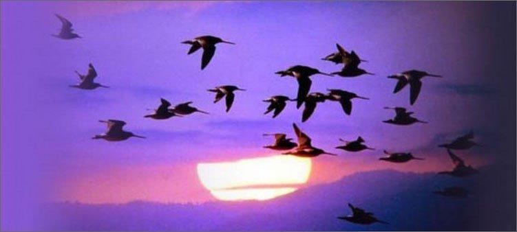 перелетные-птицы-в-небе