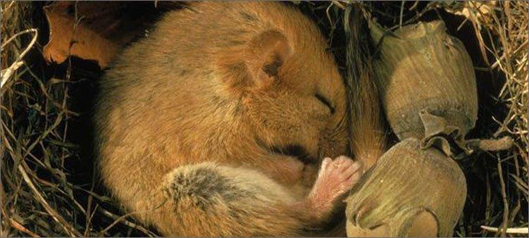 суслик-спит-в-норке