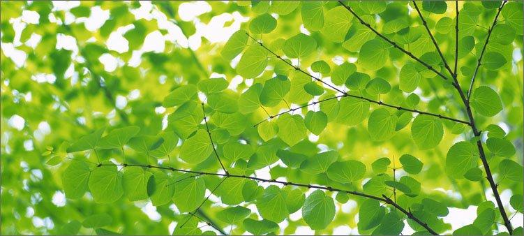 летняя-зеленая-листва
