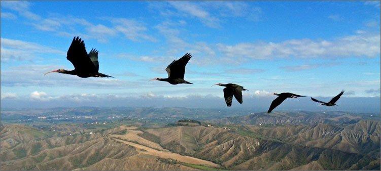 птицы-летят-над-горами