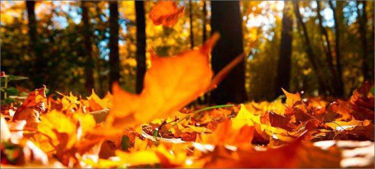 опавшие-осенние-листья