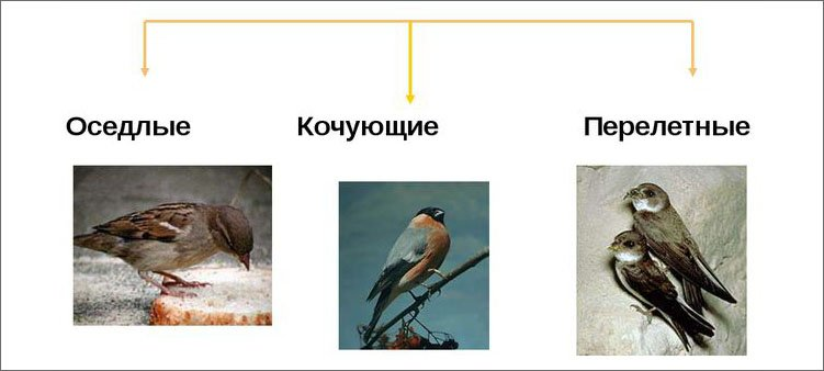 схема-виды-птиц
