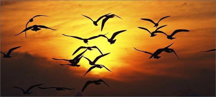 перелетные-птицы-на-фоне-солнца