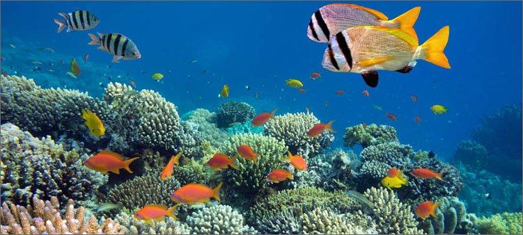 рыбки-в-кралловых-рифах