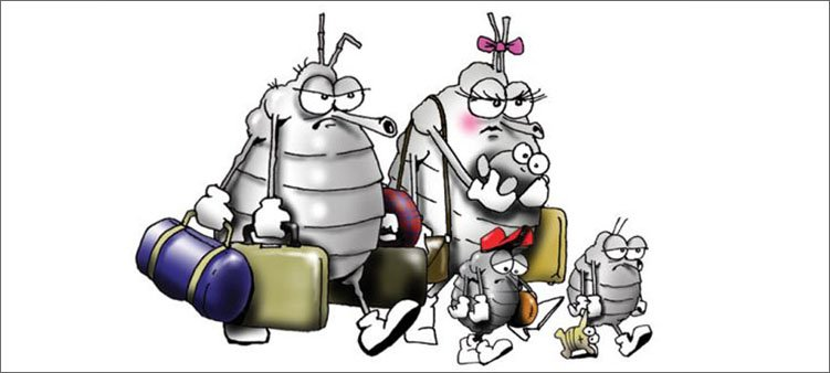семья-вшей-уходит-с-чемоданами
