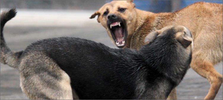 две-агрессивные-собаки