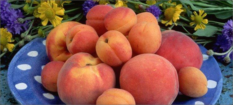 абрикосы-и-персики-в-тарелке