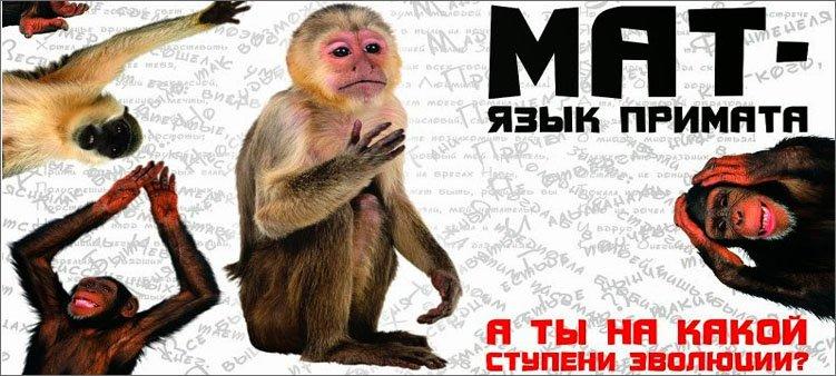 плакат-мат-язык-приматов