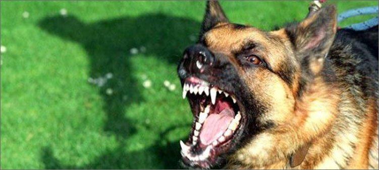 страшная-собака