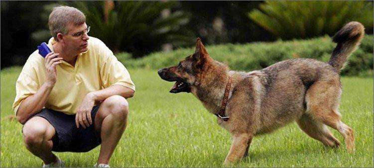 собачий-инструктор