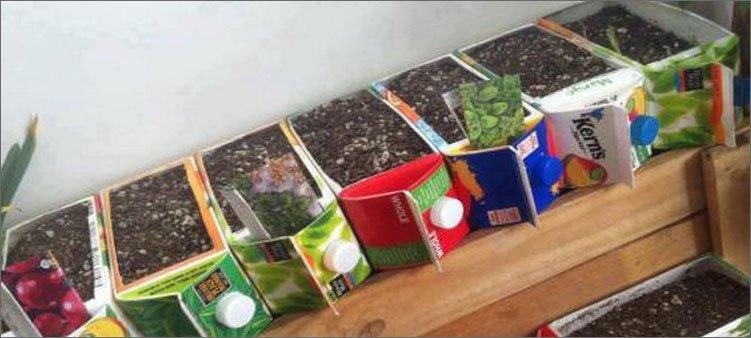 огород-в-коробках