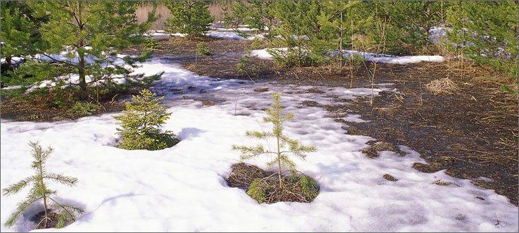проталины-в-лесу-в-марте