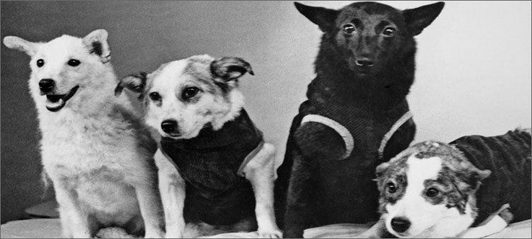 собаки-дворняжки