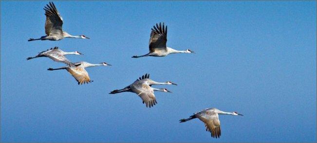 журавли-летят