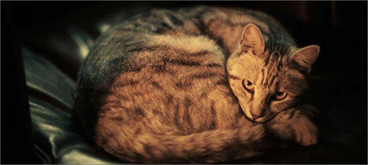 кошка-свернулась-клубком