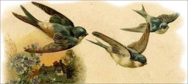 ласточки-прилетели