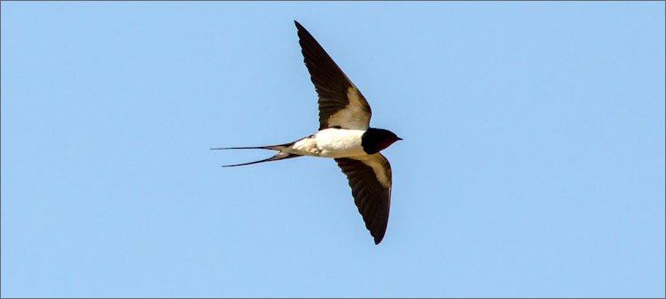 ласточка-летит
