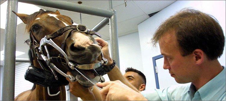 ветеринар-осматривает-лошадь