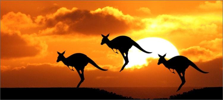 кенгуру-в-австралии