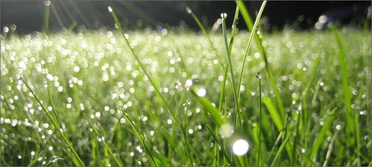 роса-на-траве