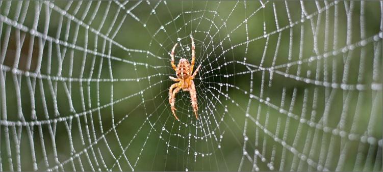 паук-на-паутине