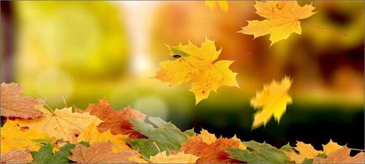 листья-падают