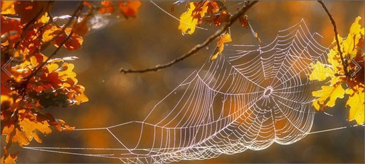 паутинка-осенью