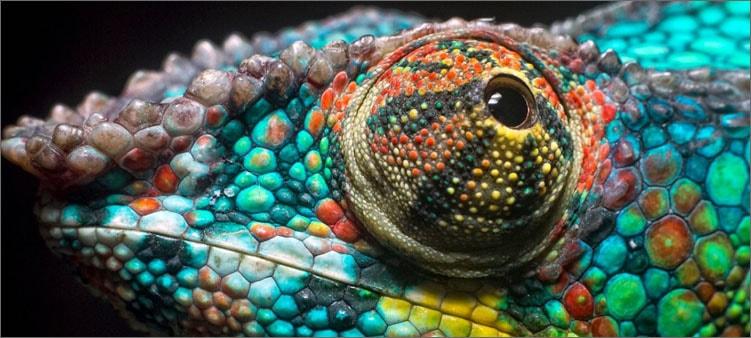 глаз-хамелеона