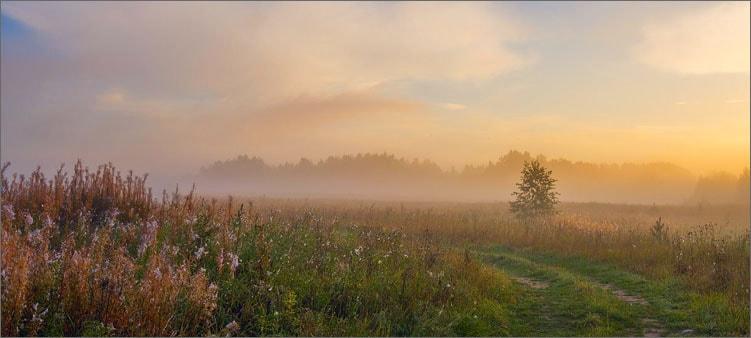 туманное-утро