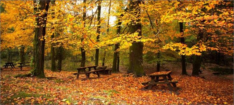 листопад-в-октябре