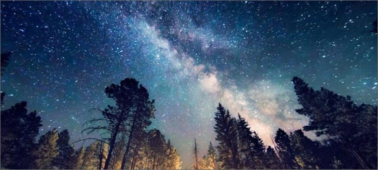 лес-и-млечный-путь