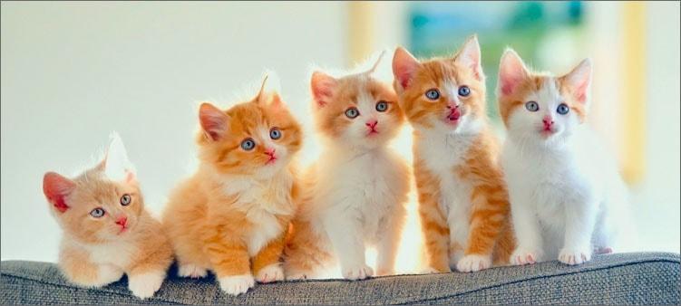 симпатичные-котята